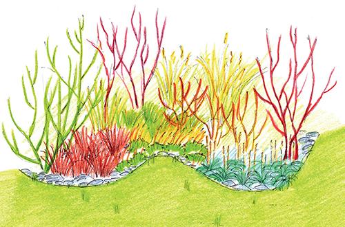 Návrh výsadby okrasných trav a efektních dřevin