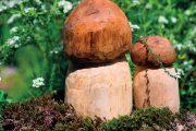Dřevěné hříbky vyniknou třeba v mechu.