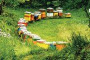 Sklenice včelího medu, půl lékárny doma.