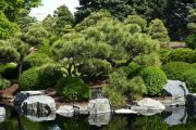 Tvarované jehličnany se skvěle uplastňují v asijské zahradě.