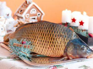 Vánoce si bez českého kapra už neumíme ani představit.