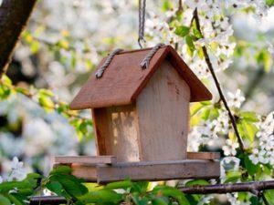 O typu ptačí budky musí rozhodnout druh ptáků, které chcete do zahrady nalákat.