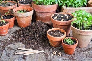 Některé druhy rostlin se vysévají již v lednu či únoru.