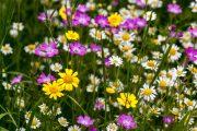 Květnatá louka je opravdovou pastvou pro oči.