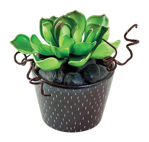 Živiny mají pro pokojové rostliny zásadní význam.