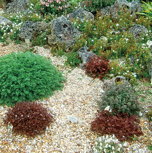 Mulčování štěrkem nebo hrubým pískem je vhodné pro všechny rostliny, které jsou citlivé na vlhko.