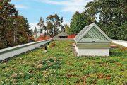 Porost na střeše plní izolační úlohu.