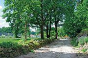 Cesta je v tomto zahradnictví určujícím prvkem, symbolickou červenou nití...