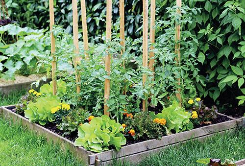 Vyšší rostliny vysazujte vždy na střed záhonu.