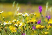 Druhové složení trávníku se během let mění, dodatečné výsevy do zapojeného porostu jsou ovšem komplikované.