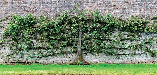 Jabloně a hrušně jsou v ovocnářství i zahradní architektuře jednoznačně nejoblíbenějšími dřevinami.