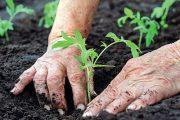 Pěstování zeleniny na vyvýšených záhonech usnadní mnoho práce.
