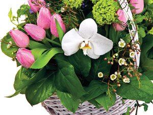 V únoru je možné ze zahrady využít hlavně stálezelenou vegetaci.