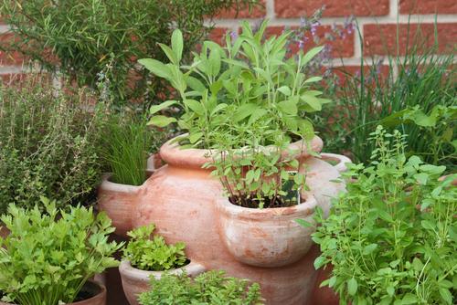Pokud nemáte na své zahradě dostatek místa, zkuste květináč určený přímo pro pěstování bylinek.