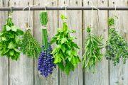 Sklizeň i zpracování bylinek představují úžasnou aromaterapii.