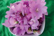 Sléz velkokvětý, jetel prostřední a hrachor širolistý – to je letní růžová radost.