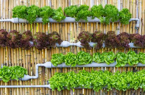 Vertikální zahrady mívají různou podobu.