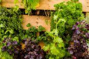 Pokud si chcete vytvořit sami vertikální zahradu, dobře vám poslouží i dřevěná paleta.