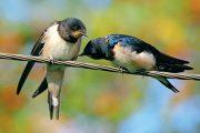 Mnoho běžných ptáků naší přírody i zahrad patří mezi stěhovavé druhy.