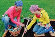 V březnu už můžete bez obav vysévat všechny kořenoviny, jako je karotka, mrkev, petržel.
