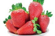 Jahody patří k nejoblíbenějšímu ovoci, pořiďte si proto kvalitní certifikovanou frigo sadbu vhodnou do našich podmínek.
