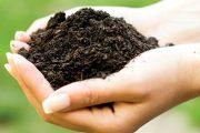 Když v dlani zmáčknete vlhkou hroudu hlíny a uděláte z ní pevnou kouli, máte nejspíš půdu těžší.