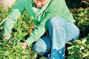 Bohatou sklizeň vám zajistí včasná příprava záhonu, kvalitní sadba a správná péče o rostliny.
