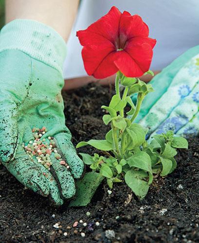 Kvetoucí rostliny potřebují hodně živin.