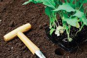 Kedlubny preferují hlinité nebo hlinitopísčité půdy s dostatečným množstvím humusu.