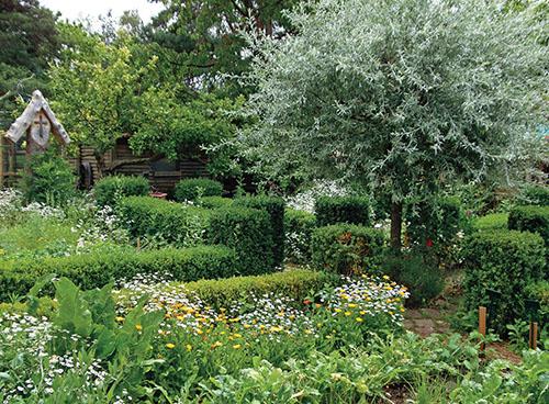 V Tradiční venkovské zahradě s vinným sklípkem se na záhoncích oddělených živými plůtky prolínají ovocné stromky, zelenina, bylinky a letničky s trvalkami.
