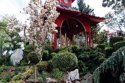 V Červeném pavilonu se denně můžete zúčastnit svátečního čajového ceremoniálu.