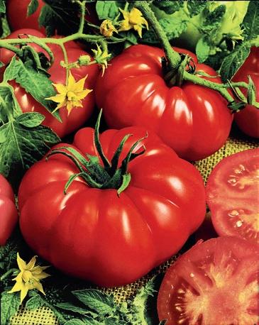 Masité rajče vhodné do salátů