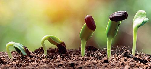 Jaro je symbolem znovuzrození a i vy máte možnost svými výsevy přispět k přírodnímu koloběhu.