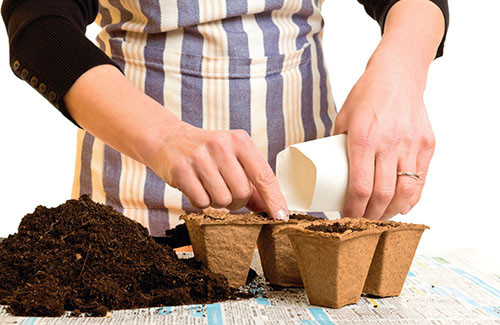 U starších semen proveďte zkoušku klíčivosti.