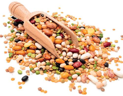 Bez zelených rostlin by nebyl život a bez semen by nebyly rostliny.