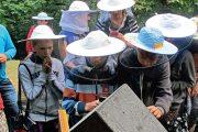 Besedy a exkurze u včel