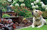 Někdy je nutné na zahradě provést i razantnější zásah.