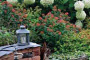 Po zastavení čerpadla působí klidná vodní hladina jako zrcadlo, díky němuž získá zahrada klidný až rozjímavý charakter (začátek srpna 2014).
