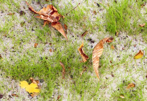 Pískování trávníku je jednou z možností, jak urovnat terén po krtincích.