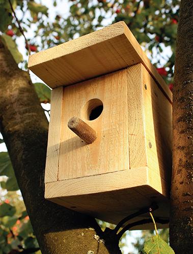 Výroba ptačí budky může být zábava pro děti i dospělé.