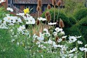 Jednoleté krásenky vnášejí do zahrady Great Dixter jemnou něžnost.