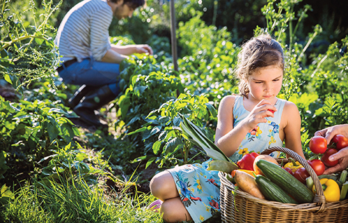 Praktická ekologie předpokládá hodně znalostí a zkušeností, a ekologickou zahradu je proto těžší vymyslet a naplánovat než realizovat.