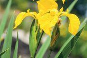K vodním plochám vybírejte domácí druhy rostlin.