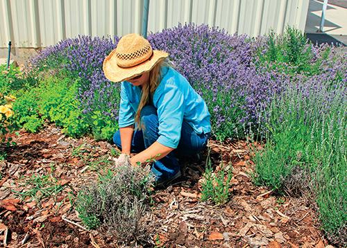Mnoho zahrádkářů si mulčování výsadeb spojuje pouze se snahou omezit růst a vývoj plevelů.