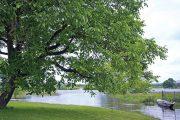 Ořešák patří mezi teplomilné stromy, je pro něj proto lepší, když náročné období zakořeňování absolvuje během teplejších dnů.