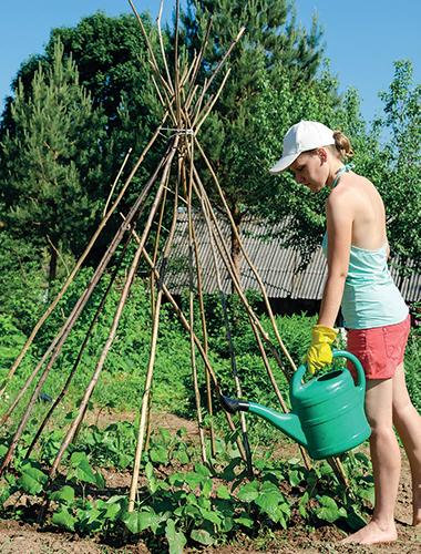 Fazole nepotřebují předpěstovat.
