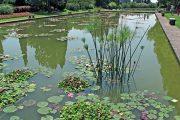 Vodní zahrada se sortimentem leknínů a lotosů
