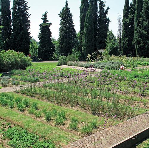 V zahradě léčivých rostlin najdete na 40 významných druhů používaných v léčitelství.