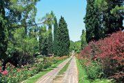 Začátek cesty Viale delle Rose, která je přibližně kilometr dlouhá a osázená více než 30 tisíci růží.