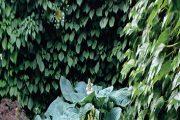 Stinný dvorek s pergolou hned za domem oživují výsadby bohyšek s různou barvou listů.
